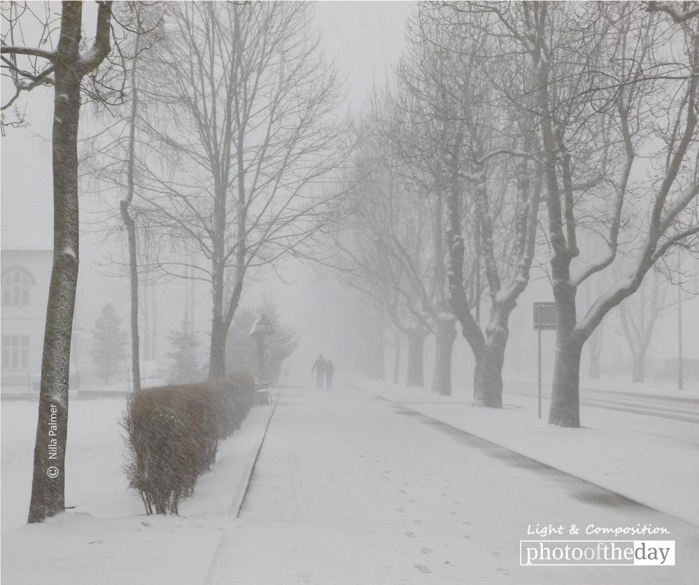 Blizzard, by Nilla Palmer