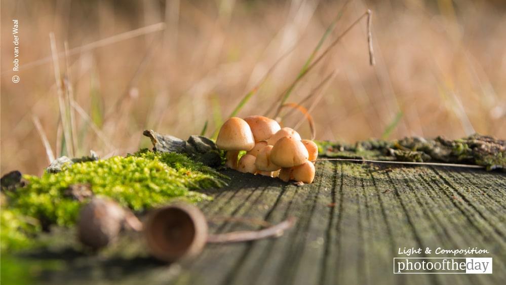 Small Autumn World, by Rob van der Waal