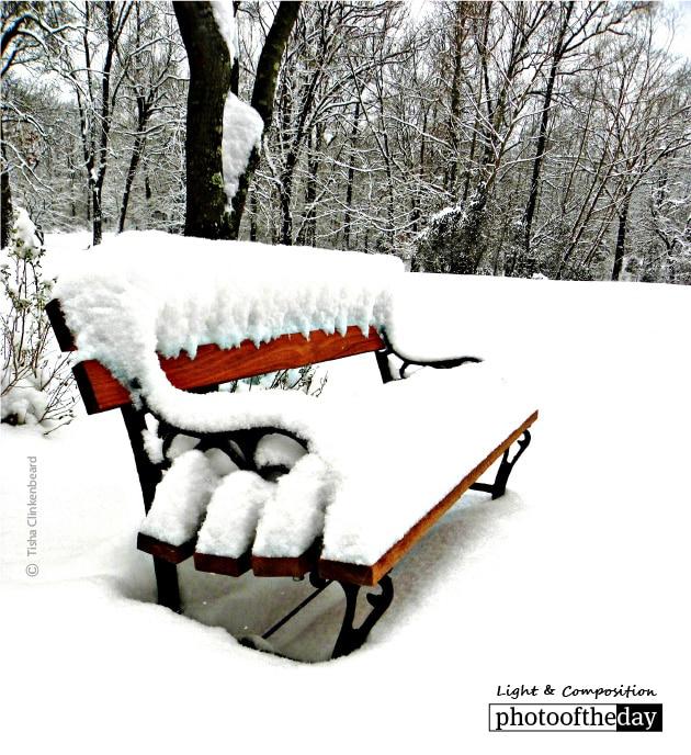 Snowy Seat, by Tisha Clinkenbeard