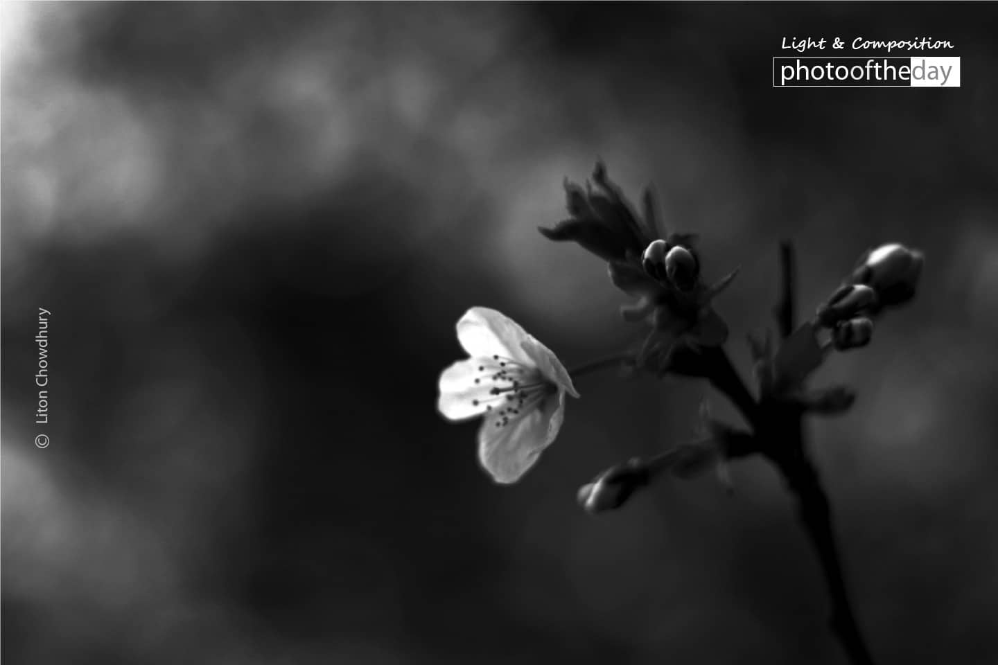 A Flower Story, by Liton Chowdhury