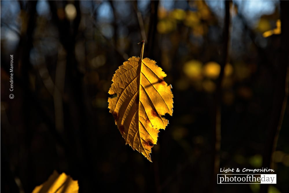 Lonely Leaf, by Cendrine Marrouat