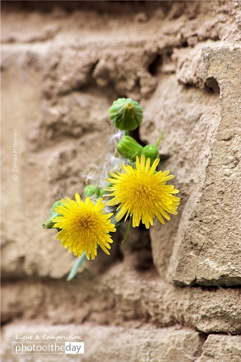 Invincible Flower, by Zahraa Al Hassani