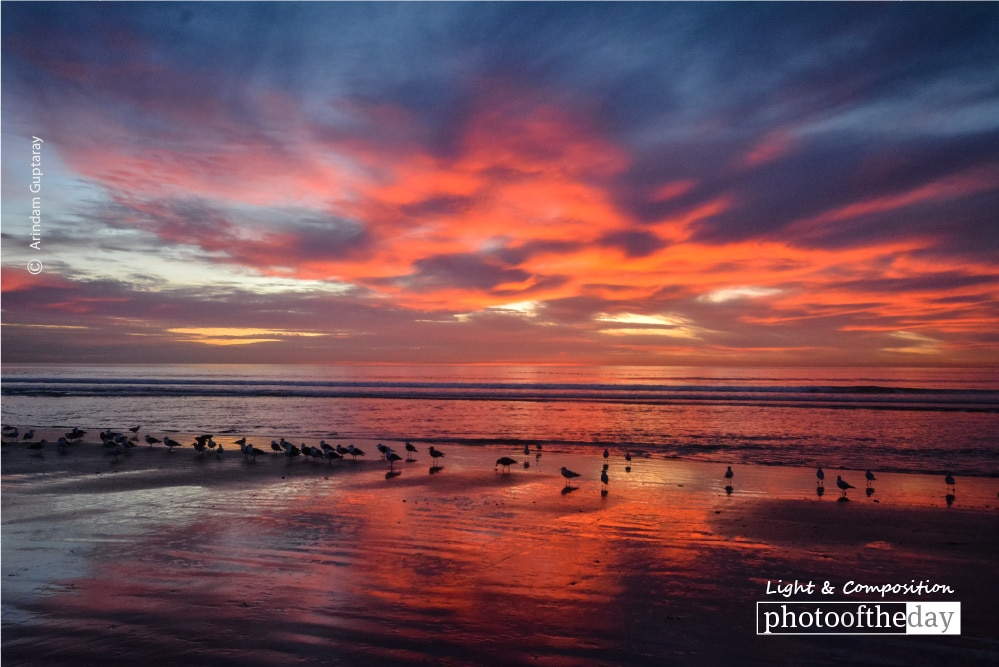 Birds, Sea, and the Fiery Sky, by Arindam Guptaray