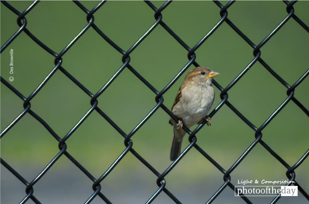 Bird in a Wire, by Des Brownlie