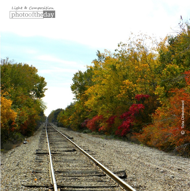 Fall Tracks, by Tisha Clinkenbeard