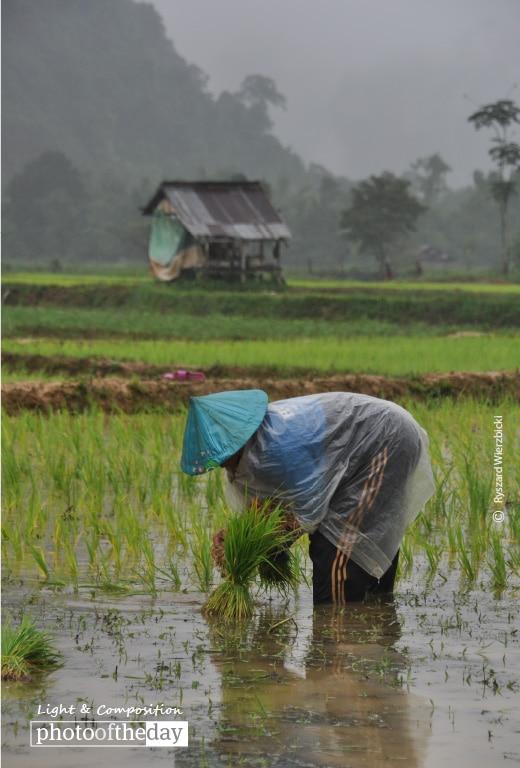 A Laotian Farmer, by Ryszard Wierzbicki