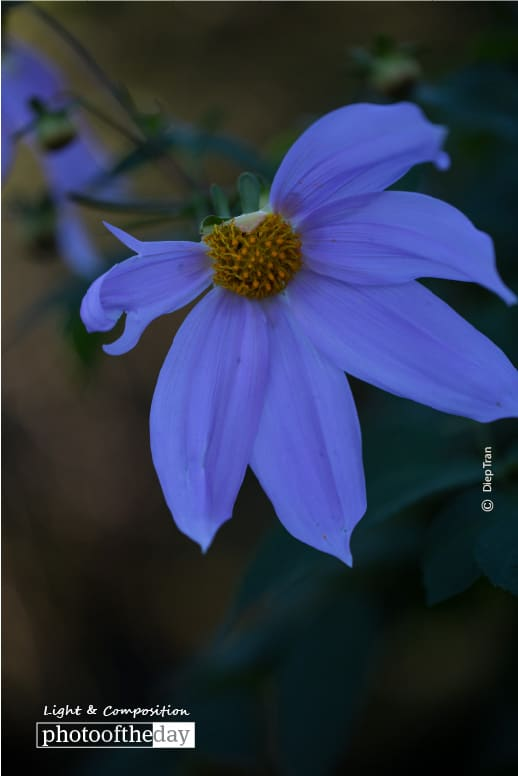 Purple Delight, by Diep Tran