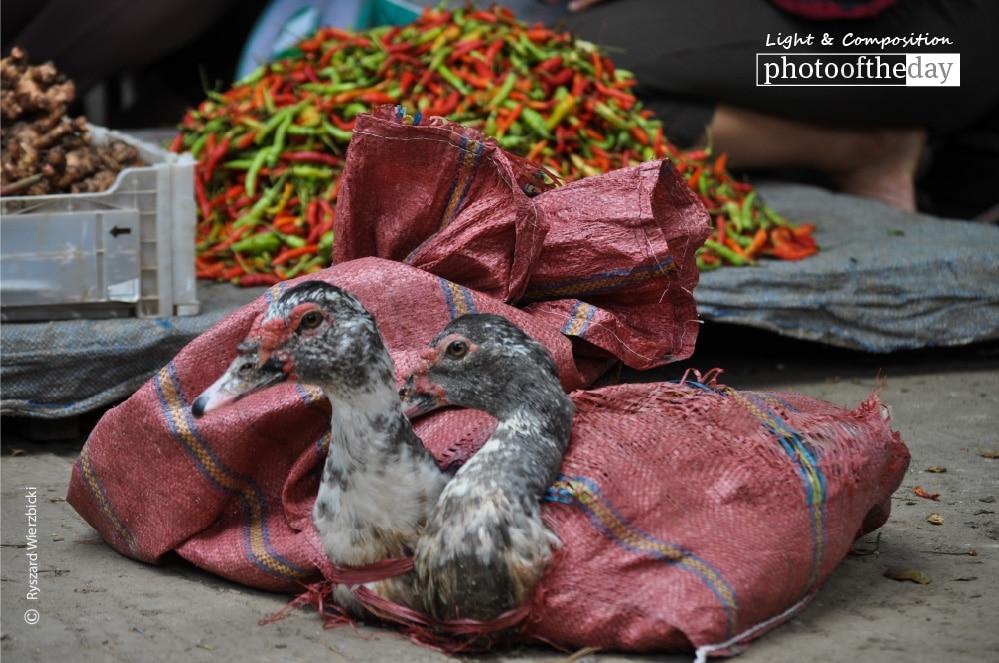 Poultry for Sale, by Ryszard Wierzbicki