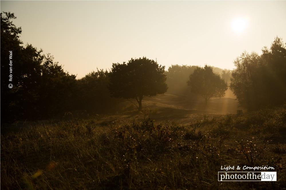Morning Light, by Rob van der Waal