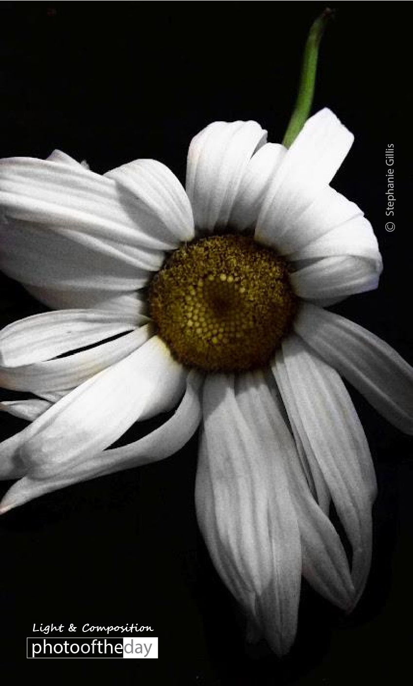 White Summer, by Stephanie Gillis