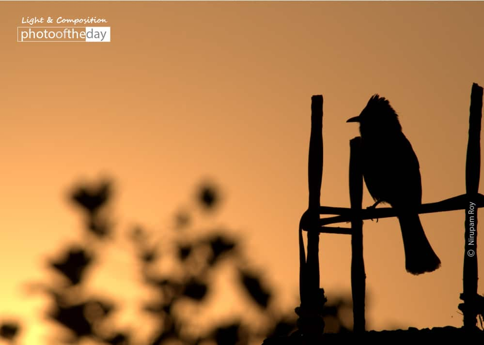 Thinking at the Sunset, by Nirupam Roy