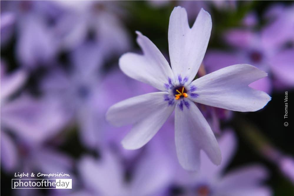 In the Purple, by Thomas Vasas