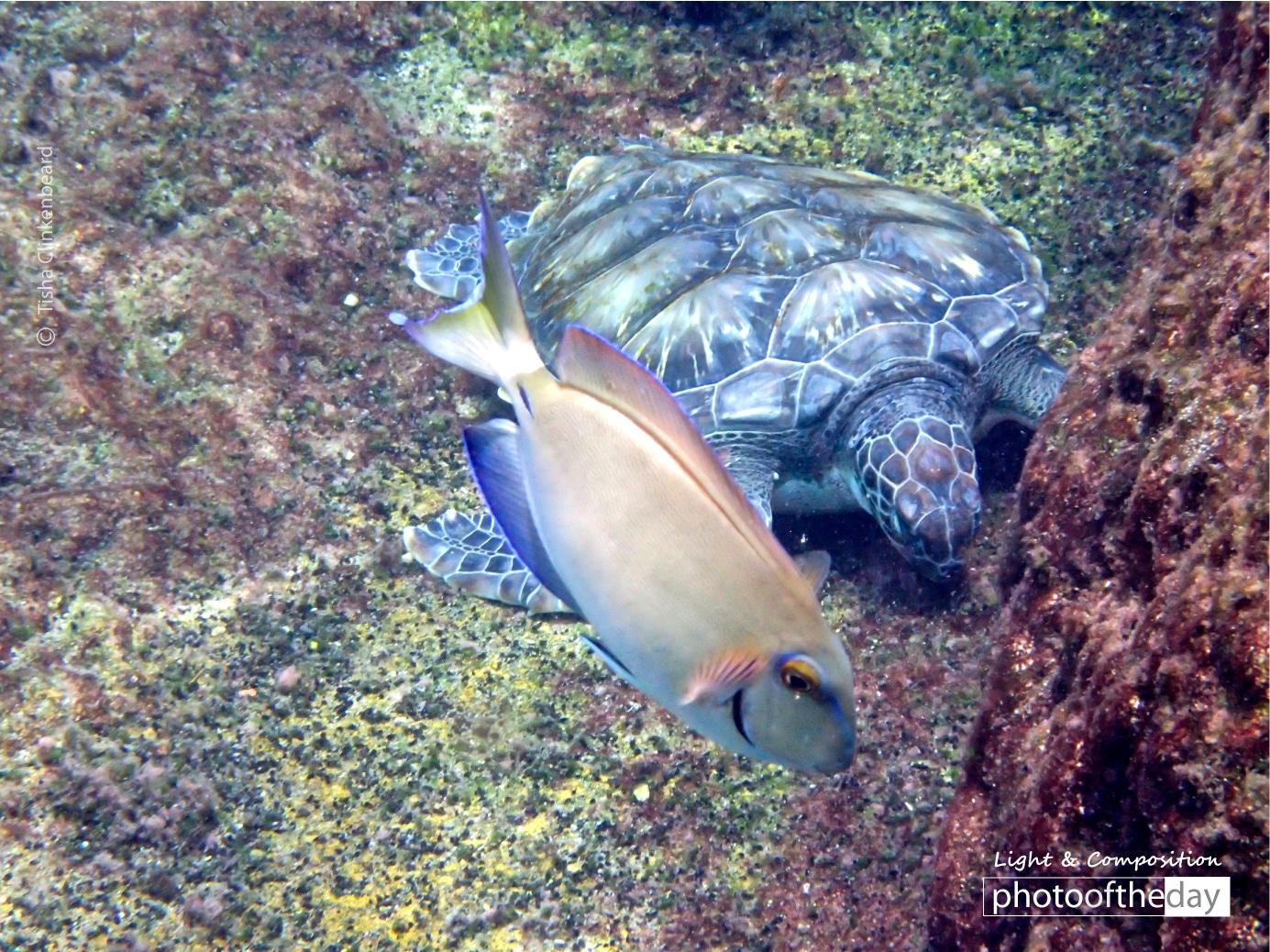 Smiling Fish and Turtle, by Tisha Clinkenbeard