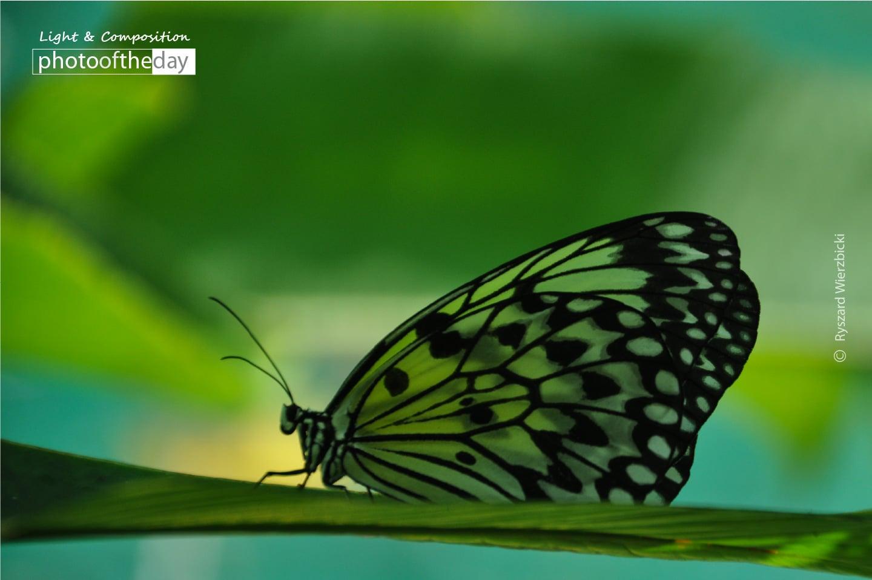 Siquijor Island Butterfly, by Ryszard Wierzbicki
