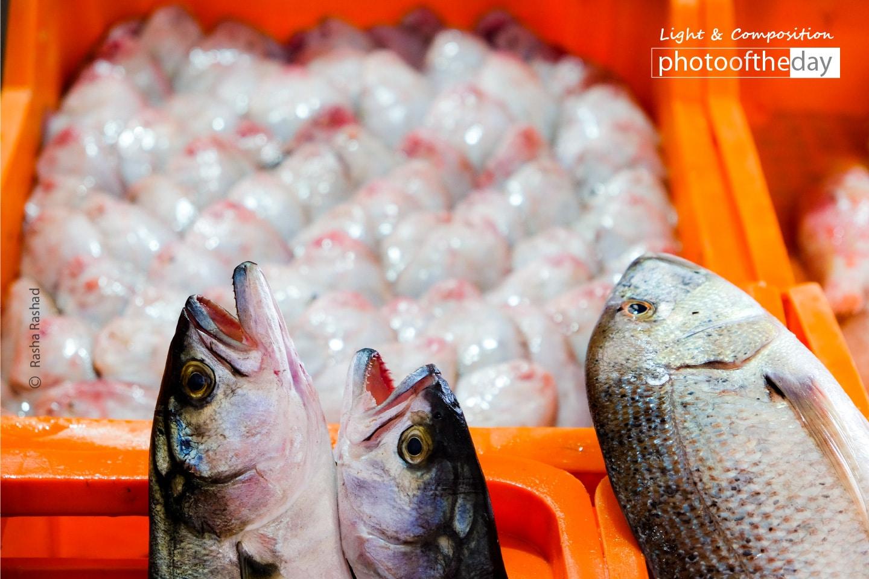 Fresh Fish in the Market, by Rasha Rashad