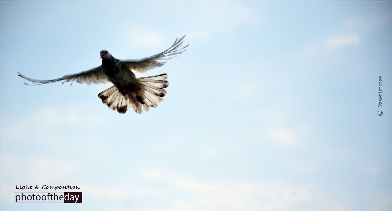 Reach the Sky, by Yasef Imroze
