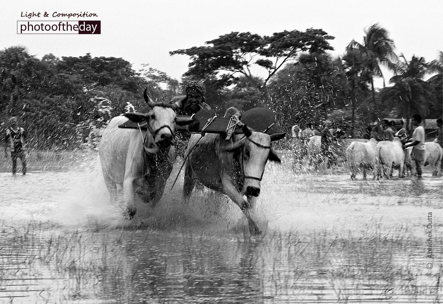 Bull Race, by Abhishek Dutta