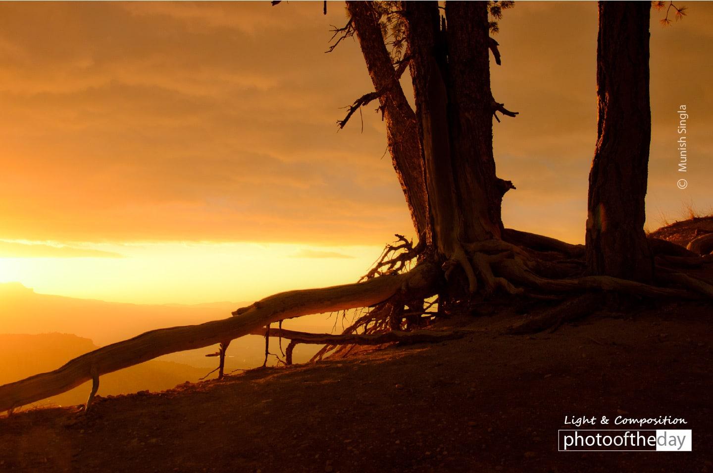 Misty Sunrise, by Munish Singla