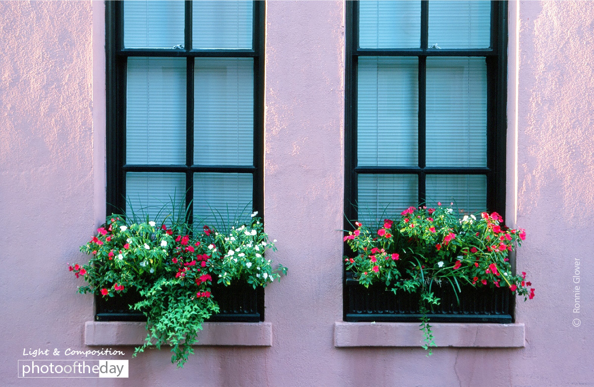 Window Boxes, by Ronnie Glover