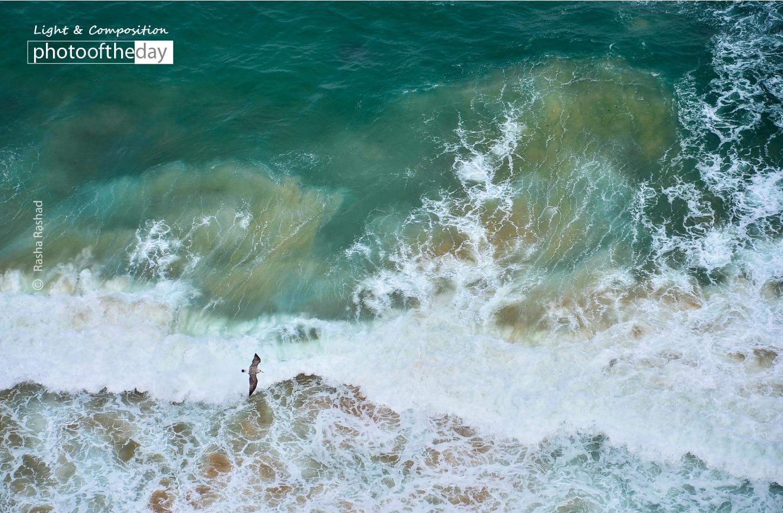 Fly Like an Eagle over the Sea, by Rasha Rashad