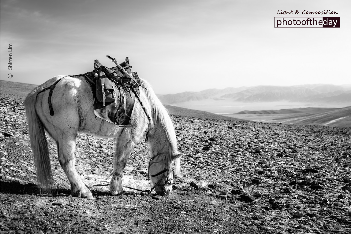A Horse Grazes on the Mountain, by Shirren Lim