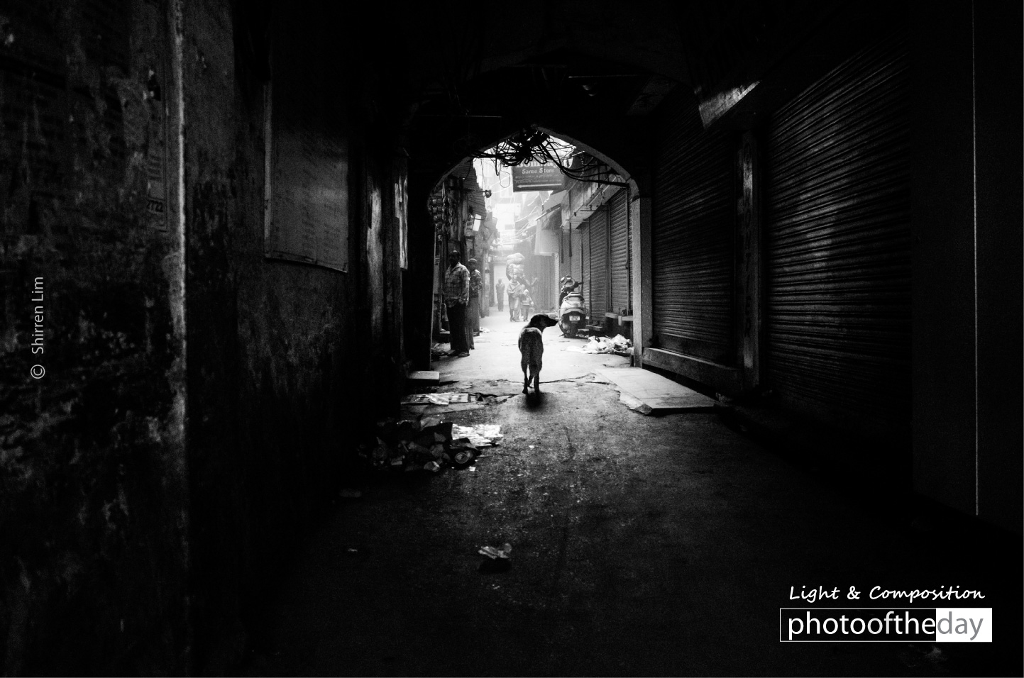 Stray Dog in an Alleyway by Shirren Lim