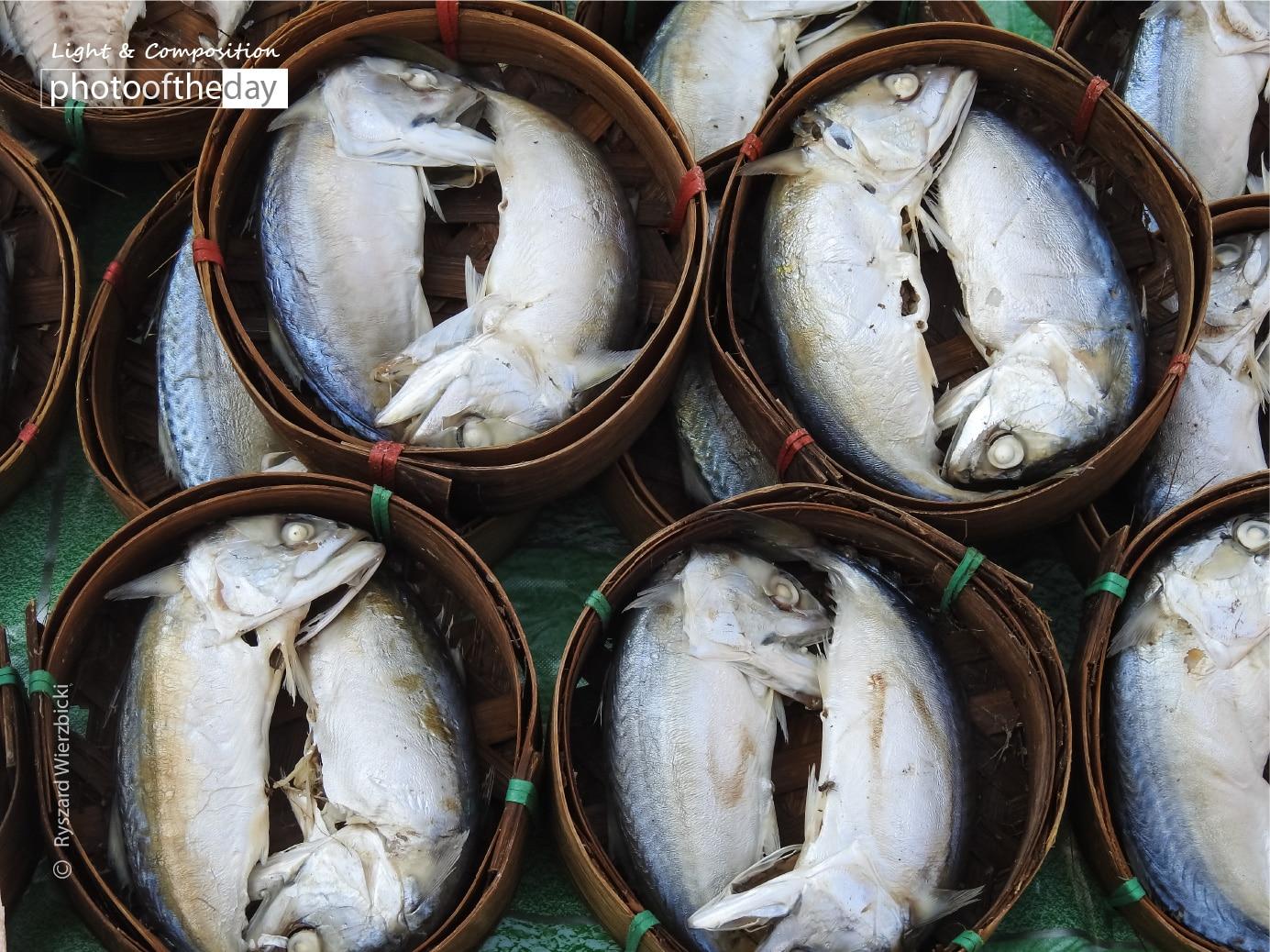 Thai Mackerel Fishes by Ryszard Wierzbicki