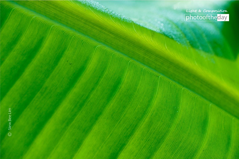 Banana Leaf by Siew Bee Lim