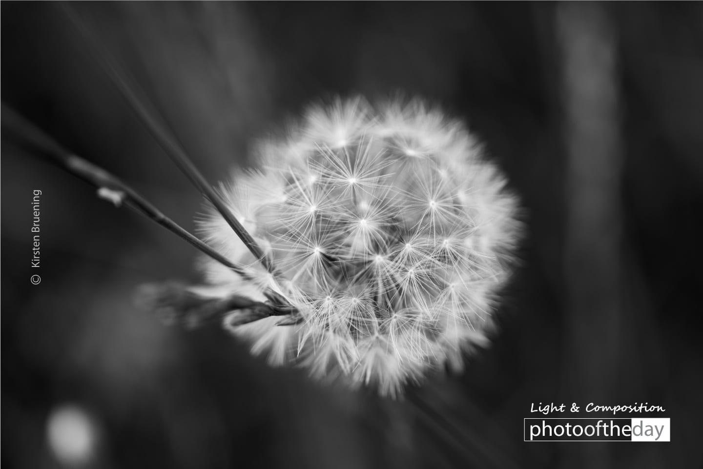 Make a Wish by Kirsten Bruening