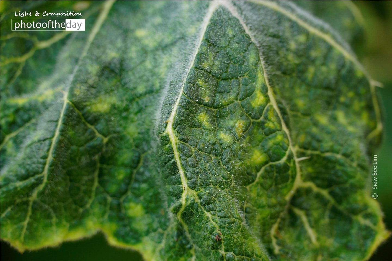 A Leaf by Siew Bee Lim