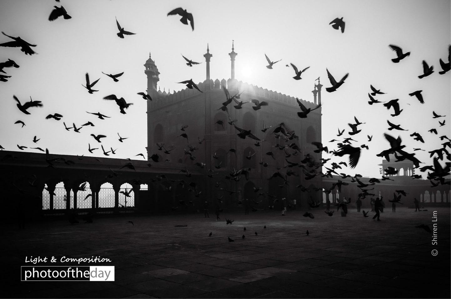 Morning Birds by Shirren Lim