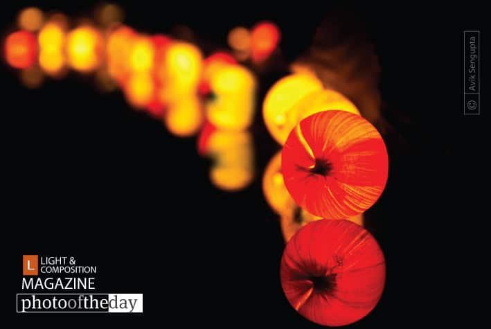 Glowing Caterpillar, by Avik Sengupta