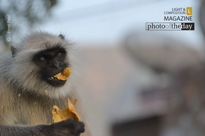 Snack Time, by Preeti Patel