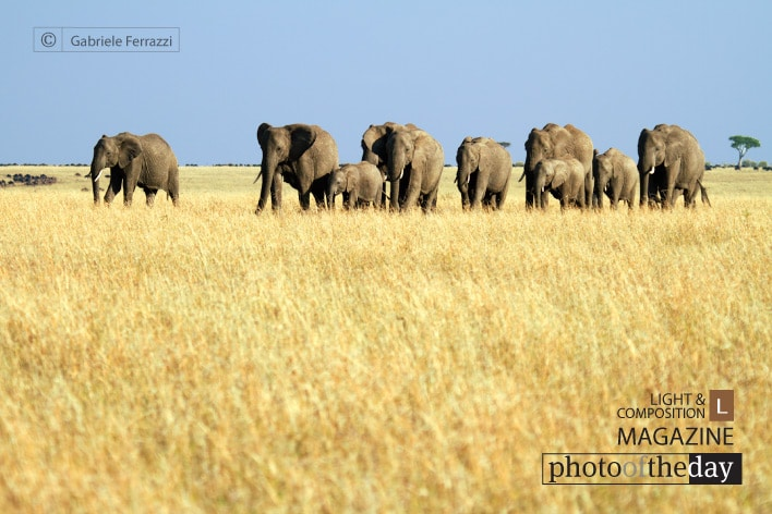 Mara Elephants Group, by Gabriele Ferrazzi