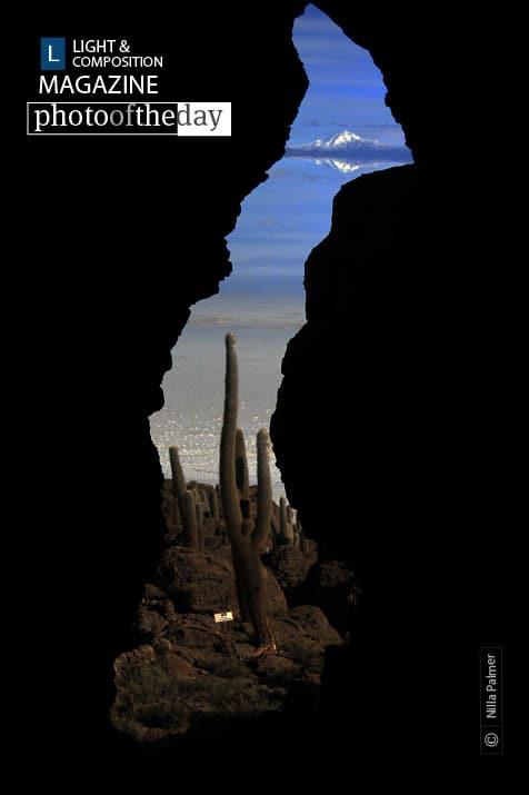 Cactus Island Glimpse, by Nilla Palmer