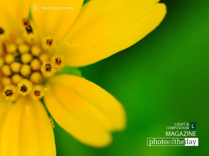 Yellow and Green, by Mai Phuong Duong