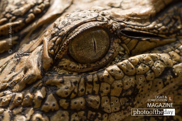 Crocodile's Eye, by Bashar Alaeddin