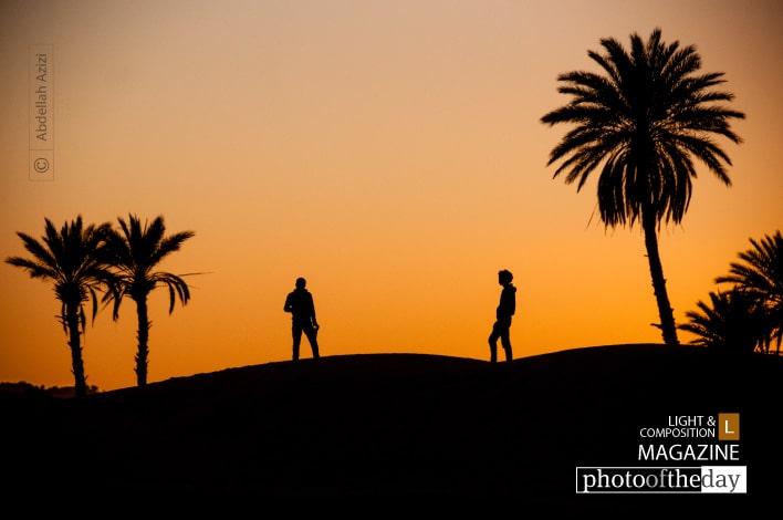 Sahara Palms, by Abdellah Azizi