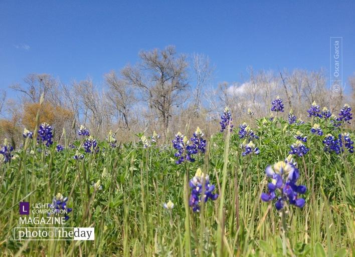 Spring has Sprung, by Oscar Garcia