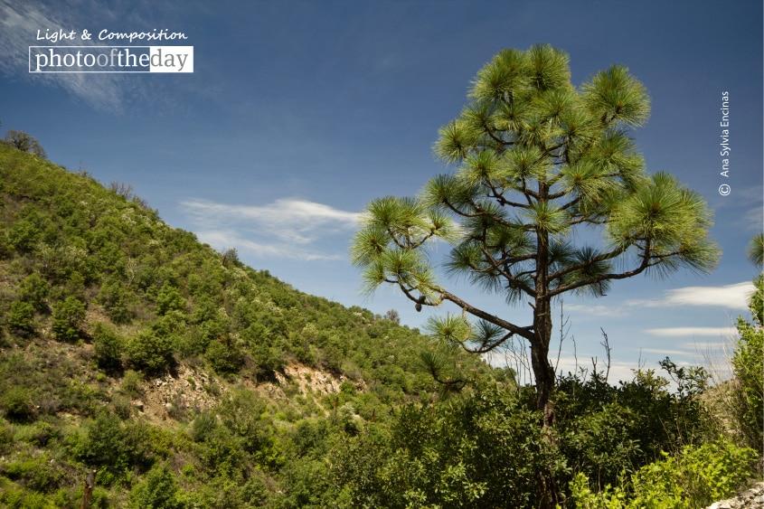 Not just Cacti in Sonora, by Ana Sylvia Encinas