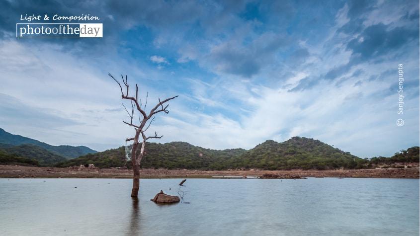 Alone, by Sanjoy Sengupta