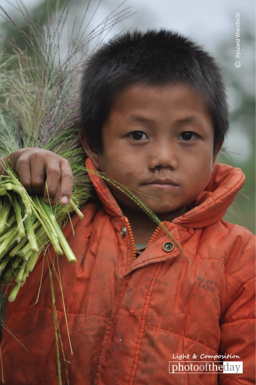 Harvesting Boy