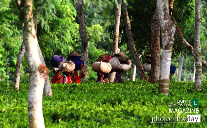 Life in the Green, by Saniar Rahman Rahul