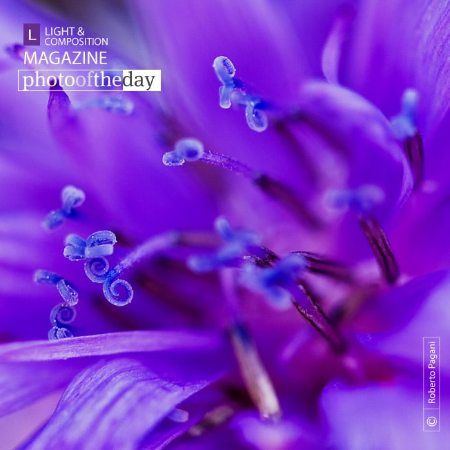 Flower Swirl, by Roberto Pagani