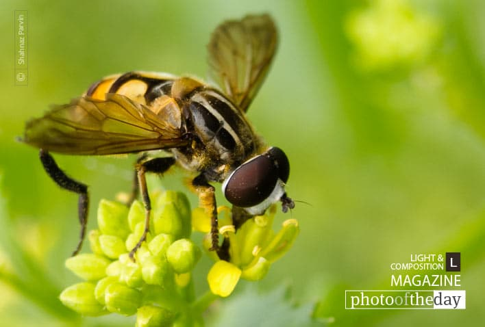 Bee in Shades of Green, by Shahnaz Parvin