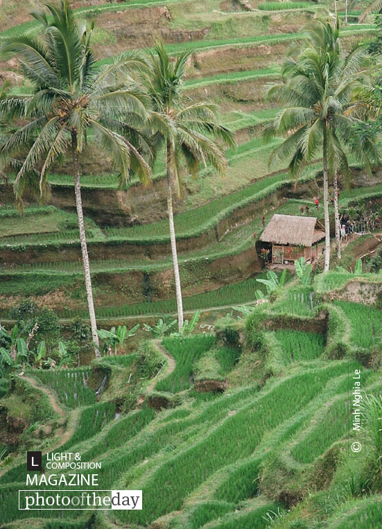 Tegalalang Rice Field, by Minh Nghia Le