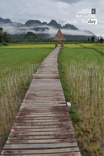 Across the Rice Field, by Ryszard Wierzbicki