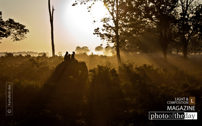 Elephant Safari, by Kamalesh Das