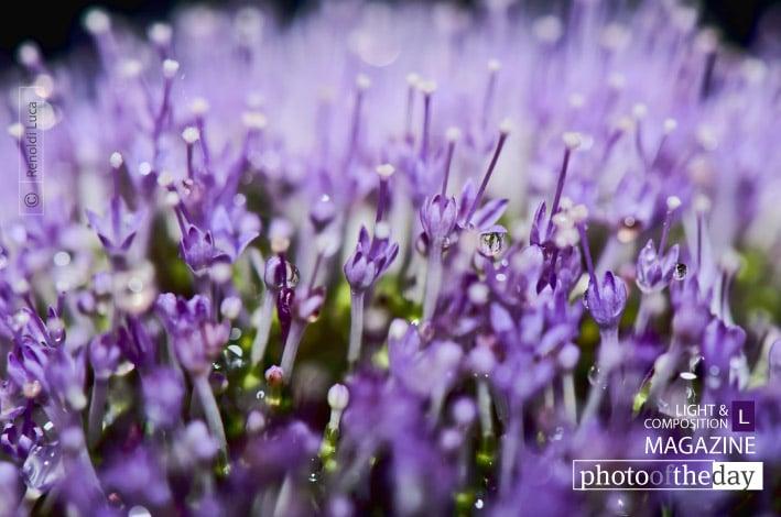 Microflowers, by Luca Renoldi