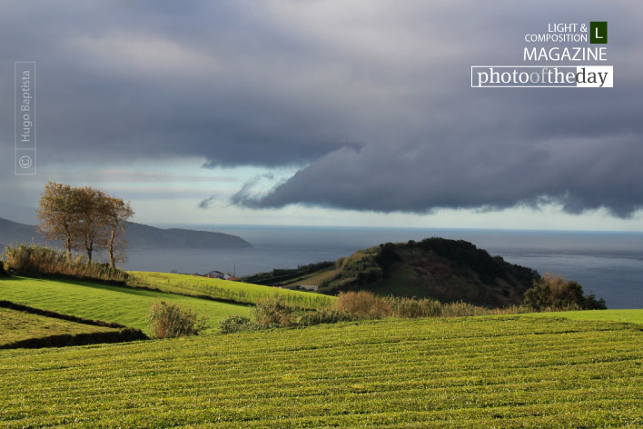 Azores Tea Farm, by Hugo Baptista